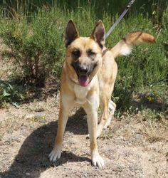 Año de nacimiento: Abril 2016 Sexo: Macho Raza: Mestizo  Tamaño: Grande  Thor es un perro alegre... - Perros en adopción - Gatos en adopción