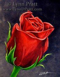 Red rose watercolor painting by Lynn D. Pratt. love