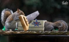 Ready For Their Closeup, These Squirrels Are An Adorable Treat From Photographer Max Ellis. | Jesus Loves You