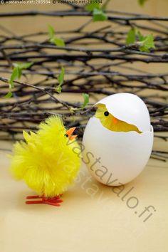 Tarvitsetko apua? - tipu pääsiäistipu pääsiäinen koriste pääsiäistiput kaksi tiput pääsiäistunnelma pääsiäiskoriste kananmuna muna kurkistaa kuoriutuu raollaan koristelu somiste juhlapyhä kevät koivunoksat hiirenkorva