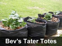 Growing potatoes in bags - you can use plastic feed or dog food bags
