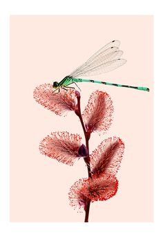 """Day 1259 - Hers Anonymous - """"My little sister Anna and I used to be obsessed with our pond in the backyard. Mostly because of the dragonflies. We would watch them approach plants and the water for hours. Every time  I spot a dragonfly now I think of..."""