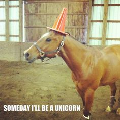 Keep dreaming pony!