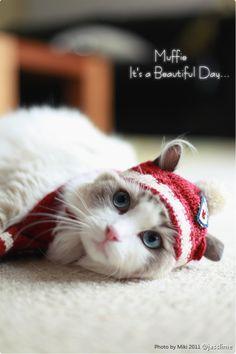 Prince Muffie Kitten, Prince, Cats, Animals, Kittens, Gatos, Animais, Kitty, Animales