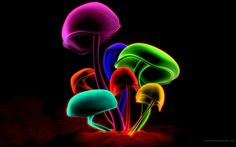 Mushrooms - Neon Multi Colour Black Background