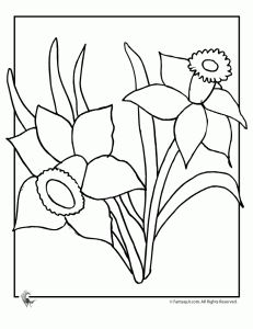 daffodil coloring pages 1 231x300 Flower Coloring Pages: Spring Flowers