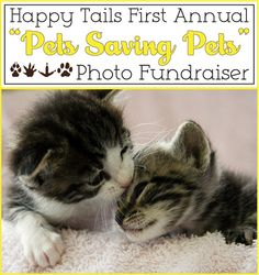 "Post a Picture — Save A Pet!    Happy Tails Pet Sanctuary invites all pet lovers to participate in the first annual ""Pets Saving Pets"" photo fundraiser to help save the lives of homeless, abandoned and abused animals — and be eligible to win a grand prize of $ 500! Click to see more details!"