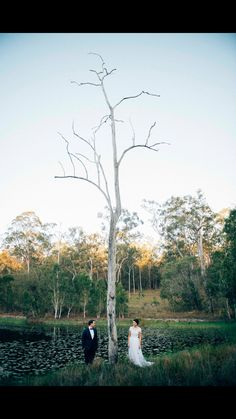 Figtree Photography - Garden wedding - bush wedding - Hanna couture - Brisbane wedding - Brisbane bride - MJ Bale - Couture Gown - outback wedding - gumtree - white bark tree