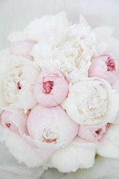Pale blooms