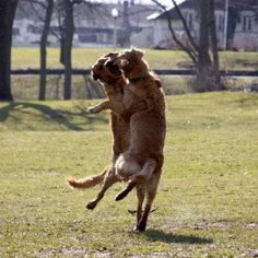 Dancing    http://www.funnypictures24.com/funny-animal-pictures/funny-dog-pictures/dancing-dogs/