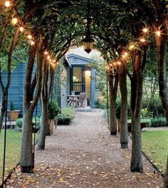 Lights strung along tree arched alley