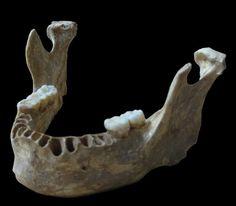 Europe : quand humains et Néandertaliens se sont croisés...