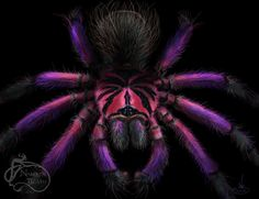 Beautiful Tarantula illustration by Nadilyn Beato