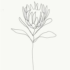 One single line is used to make a delicate flower. Credit: Emma Ryan Protea single line drawing Protea Art, Protea Flower, Daffodil Flower, Tattoo P, Line Tattoos, Botanical Line Drawing, Flower Line Drawings, Drawing Flowers, Art Flowers