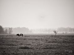 DAG 324: CANISVLIET #P412365 #canisvliet #staatsbosbeheer #zeeuw_the_series #photography #fotografie #imageoftheday #pictureoftheday