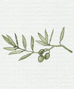 olive branch illustration - Google Search