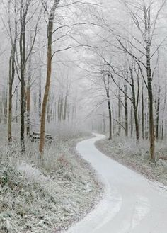 Winter road |  Winter
