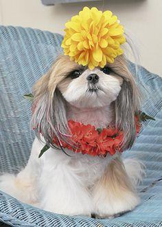 トロピカル・フラ・ガール --愛犬の友 ヘアスタイルカタログ--