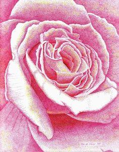 Stippled Pink Rose