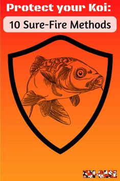 Learn how to protect your koi with these methods. Fight back against Predators & Pests!