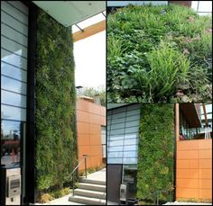 Green walls from Ambius