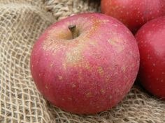 1000 images about varietes anciennes de pommes heritage apple varieties on pinterest apple - Variete de pomme de terre ancienne ...