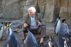 Save Planet Earth, Save The Planet, King Penguin, David Attenborough, Natural Curiosities, People Of Interest, Cute Penguins, Cool Pets, Endangered Species