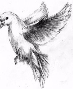 flying dove pencil drawing - Google Search