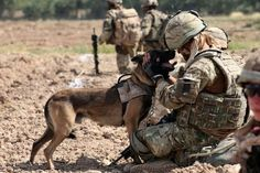 Good News for Military Dogs! | Cruelty Free