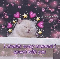Cute Cat Memes, Cute Love Memes, When Someone Loves You, You Are My Forever, Crush Memes, E Dawn, Lovey Dovey, Wholesome Memes, Anime Art Girl
