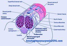http://www.howtogrowyourpenis2016.com/download-the-penis-enlargement-bible-free-pdf/ #penisenlargementbible #pebiblepdf #penisgrowth