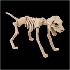 Skeleton Dog Halloween Prop £19.95  A large skeleton dog Halloween prop. 42 cm high.