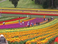 Holland Flowers Festival The Holland Flowers Festival will traditionally kick off the spring. Beautiful Flowers Garden, Beautiful Gardens, Holland Flowers, Flower Festival, Different Flowers, Countries Of The World, Tulips, Netherlands, Beautiful Pictures