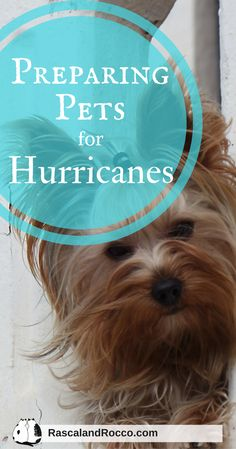 Preparing Pets for Hurricanes - Rascal and Rocco Cat Care Tips, Dog Care, Cat Owner Humor, Hurricane Preparedness Kit, Pet Parade, Emergency Preparation, Dog Items, Pet Life, Cat Health
