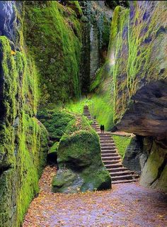 Italy travel photos Steps leading to La Verna, Tuscany, Italy Franciscan sanctuary Places Around The World, The Places Youll Go, Places To See, Around The Worlds, Places To Travel, Travel Destinations, Holiday Destinations, Destination Voyage, Tuscany Italy
