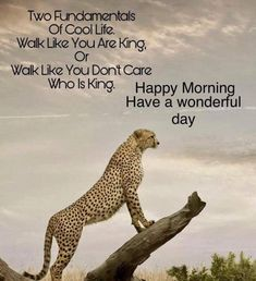 35 Good Morning Quotes With Images and Good Morning Messages 10 Funny Good Morning Quotes, Good Morning Inspirational Quotes, Morning Greetings Quotes, Good Morning Messages, Good Morning Wishes, Inspiring Quotes, Morning Verses, Morning Sayings, Night Messages