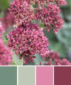 Farbinspirationen Herbstfarben in Grün und Rose http://www.farbenergie.com/2015/11/farbinspiration-salbeigruen-mit-rosa/