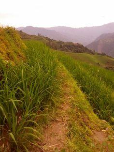 Rice terrace China Rice Terraces, Hiking, China, Walks, Trekking, Climbing, Porcelain, Walking