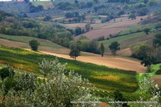 Olive groves and vineyards on the way to Rome, Italy.