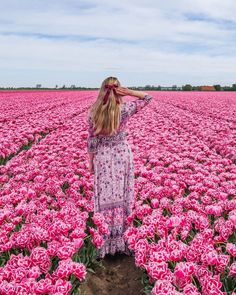 I saw a few tulip fields during my trip to the Netherlands in Eiland Goeree Overflakkee but this pink one was definitely my favorite! I have never seen such an intense fuchsia color on tulips! It was magical!  #tulip #tulips #netherlands #tulipfield #nederland #holland #eilandgoereeoverflakkee #spring #pinktulip #pink #fuchsia Tulip Fields, Pink Tulips, I Want To Travel, I Saw, Life Is Beautiful, Netherlands, Places To Visit, Memories, Holland