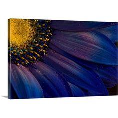 Canvas On Demand Blue Rays by Azorsteinn H. Ingibergsson Photographic Print on Canvas Size:
