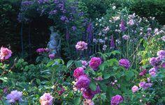 La roseraie- Les jardins de la Mansonière