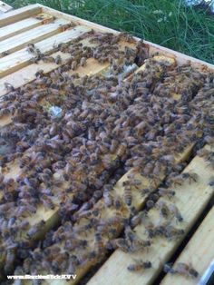 This essential oil recipe for honeybees is similar to the several commercial essential oil concentrates you can buy from beekeeping suppliers.