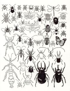 Insects and Myriapods at The American Museum of Natural History  by Jason Polan - 20x200.com (from $60)