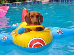 .this is a great pool toy for a water dachs
