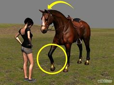 Discipline a Horse Without Using Aggression Step 6.jpg