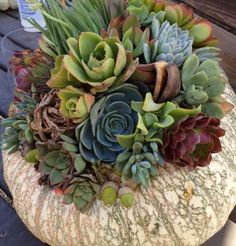 The Willows Home & Garden-Just absolutely LOVE these succulent planters...I SO wish we had nurseries here in Phoenix that sell such variety!