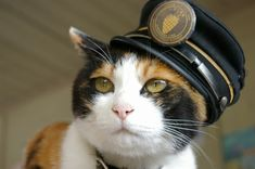 Station master cat, Tama @ Kishi station of Wakayama Electric Railway Kishikawa line, #japan, #wakayama
