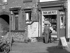 Park Lane Pets in Park Lane Aston Birmingham UK. 1955