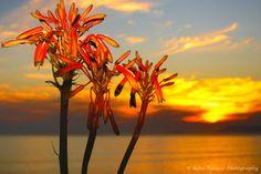 Sunset - De Kelders, South Africa